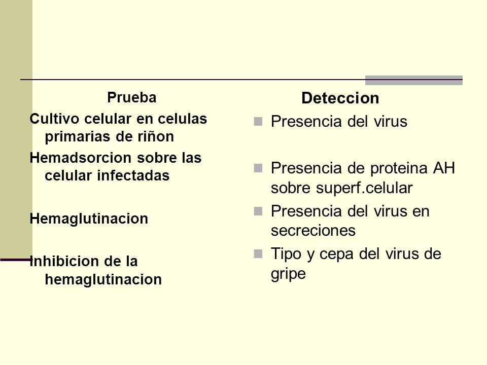 Prueba Cultivo celular en celulas primarias de riñon Hemadsorcion sobre las celular infectadas Hemaglutinacion Inhibicion de la hemaglutinacion Detecc