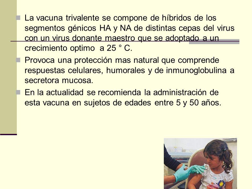 La vacuna trivalente se compone de híbridos de los segmentos génicos HA y NA de distintas cepas del virus con un virus donante maestro que se adoptado