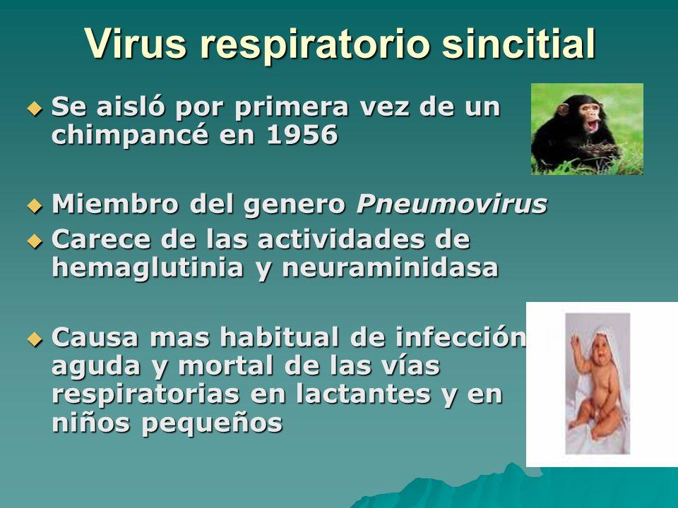 Virus respiratorio sincitial Se aisló por primera vez de un chimpancé en 1956 Se aisló por primera vez de un chimpancé en 1956 Miembro del genero Pneu