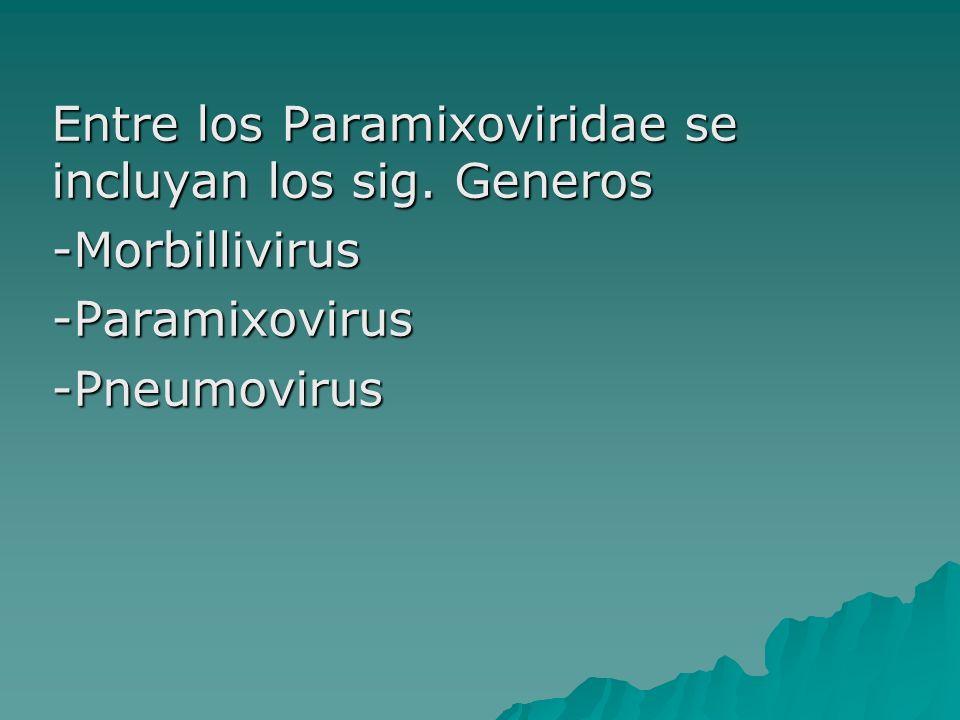 Entre los Paramixoviridae se incluyan los sig. Generos -Morbillivirus-Paramixovirus-Pneumovirus