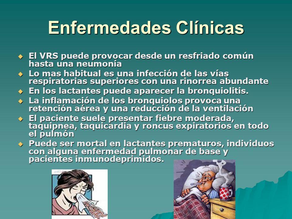 Enfermedades Clínicas El VRS puede provocar desde un resfriado común hasta una neumonía El VRS puede provocar desde un resfriado común hasta una neumo