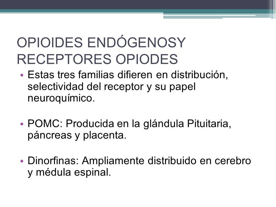 OPIOIDES ENDÓGENOSY RECEPTORES OPIODES Estas tres familias difieren en distribución, selectividad del receptor y su papel neuroquímico. POMC: Producid