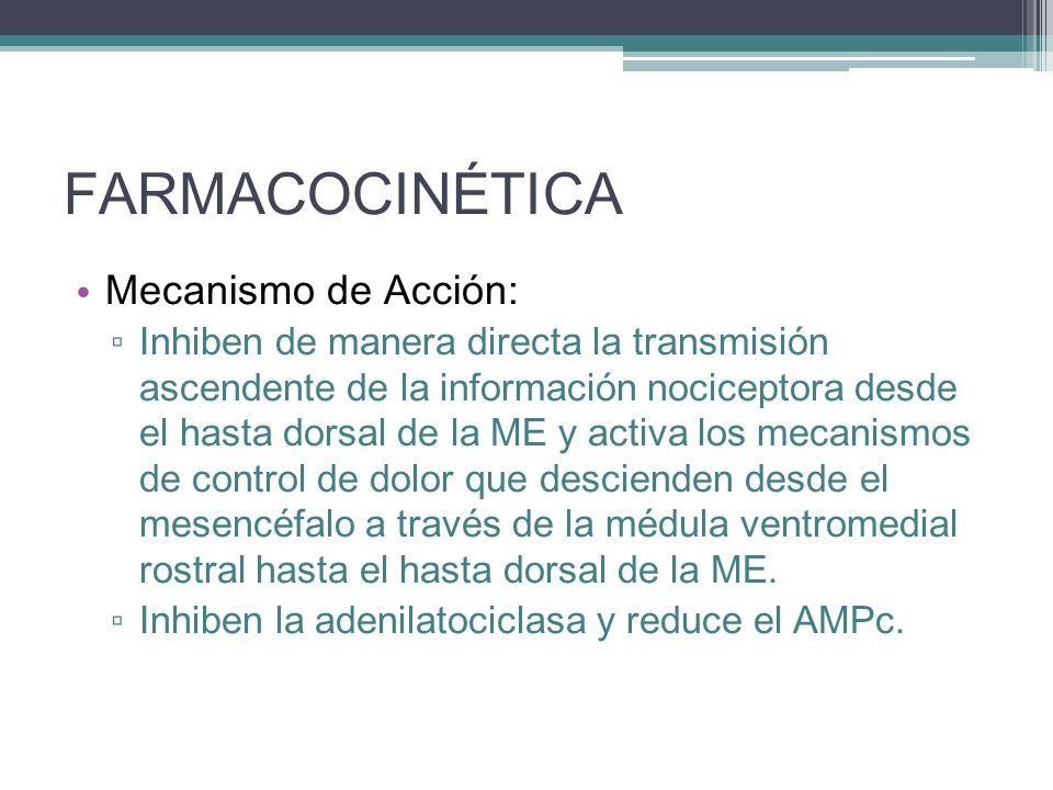 FARMACOCINÉTICA Mecanismo de Acción: Inhiben de manera directa la transmisión ascendente de la información nociceptora desde el hasta dorsal de la ME
