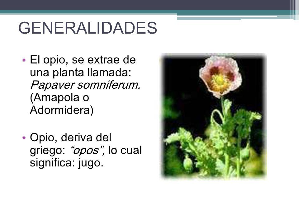 GENERALIDADES El opio, se extrae de una planta llamada: Papaver somniferum. (Amapola o Adormidera) Opio, deriva del griego: opos, lo cual significa: j