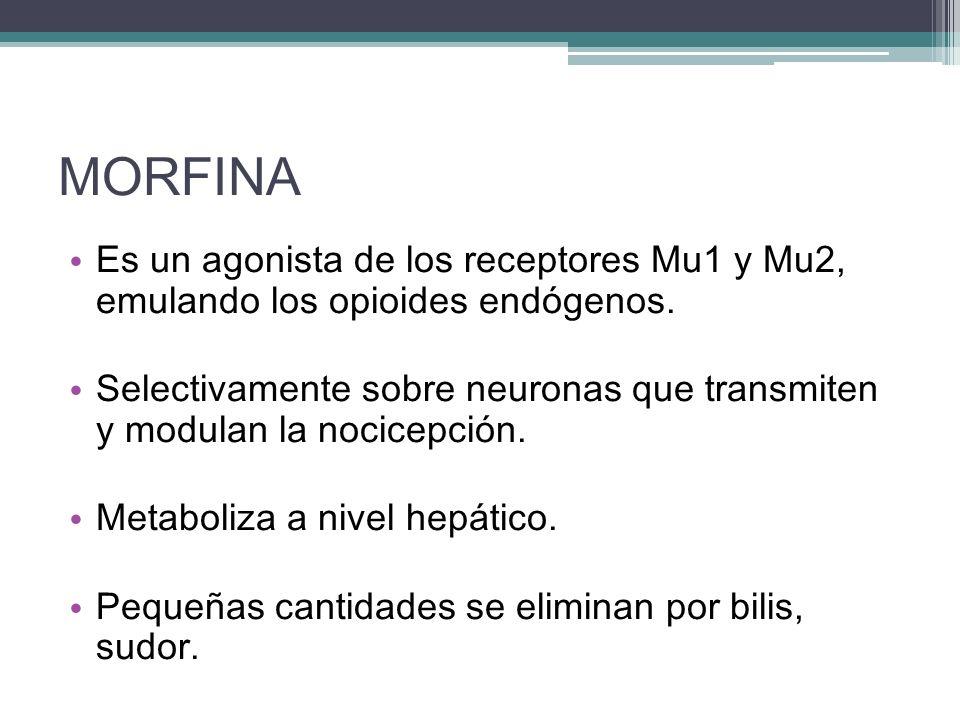 MORFINA Es un agonista de los receptores Mu1 y Mu2, emulando los opioides endógenos. Selectivamente sobre neuronas que transmiten y modulan la nocicep