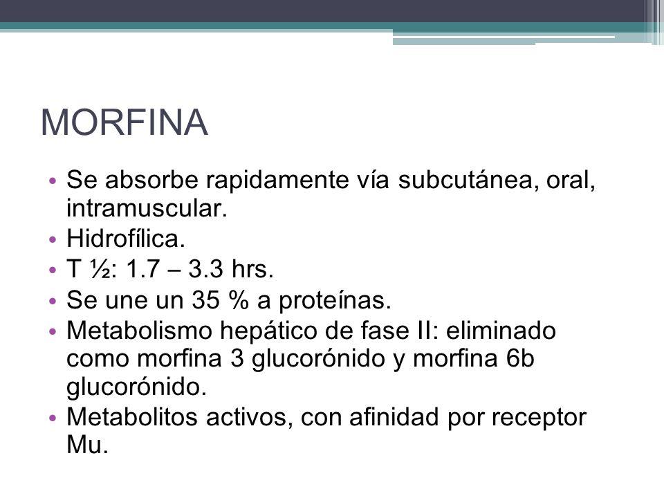 MORFINA Se absorbe rapidamente vía subcutánea, oral, intramuscular. Hidrofílica. T ½: 1.7 – 3.3 hrs. Se une un 35 % a proteínas. Metabolismo hepático