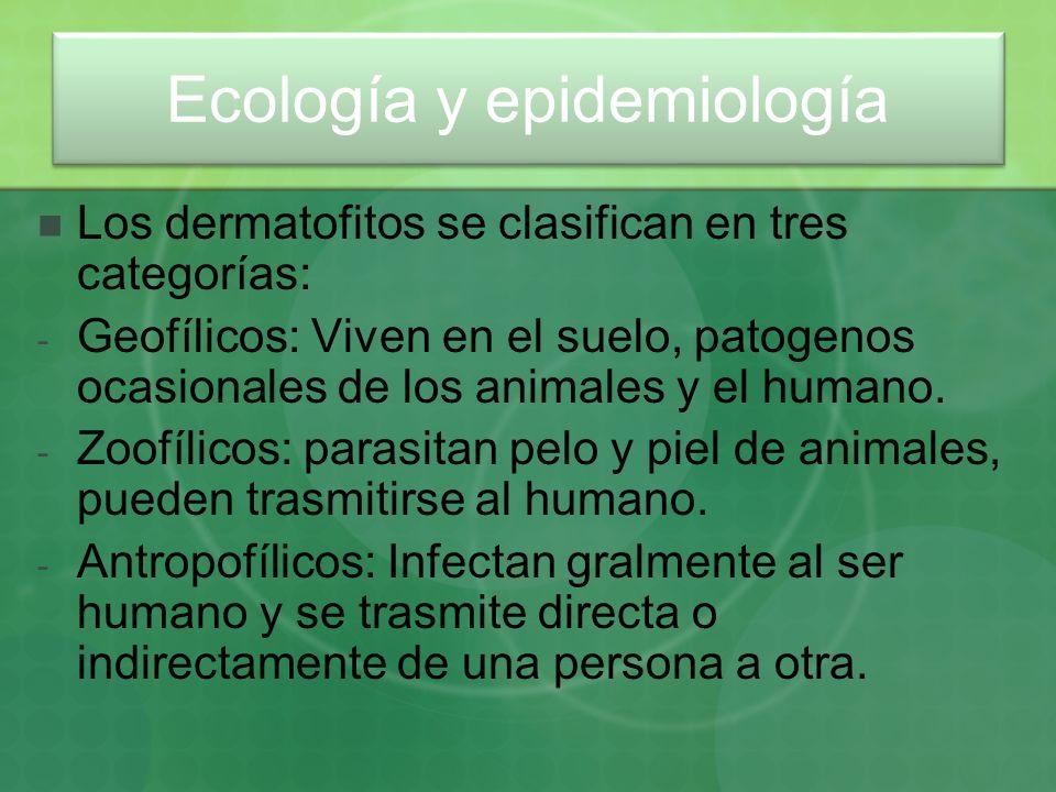 Ecología y epidemiología Los dermatofitos se clasifican en tres categorías: - Geofílicos: Viven en el suelo, patogenos ocasionales de los animales y e