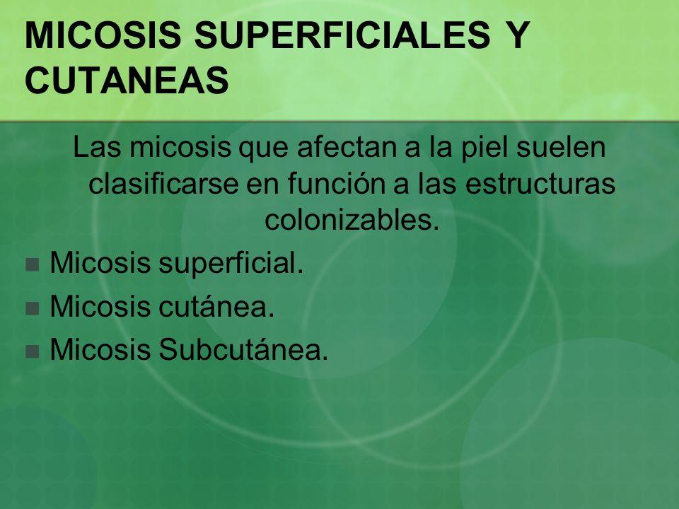 MICOSIS SUPERFICIALES Y CUTANEAS Las micosis que afectan a la piel suelen clasificarse en función a las estructuras colonizables. Micosis superficial.