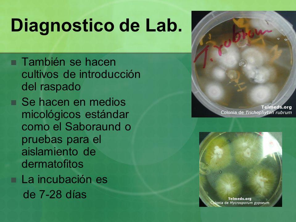 Diagnostico de Lab. También se hacen cultivos de introducción del raspado Se hacen en medios micológicos estándar como el Saboraund o pruebas para el