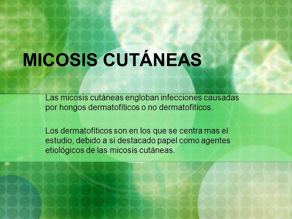 MICOSIS CUTÁNEAS Las micosis cutáneas engloban infecciones causadas por hongos dermatofíticos o no dermatofíticos. Los dermatofíticos son en los que s