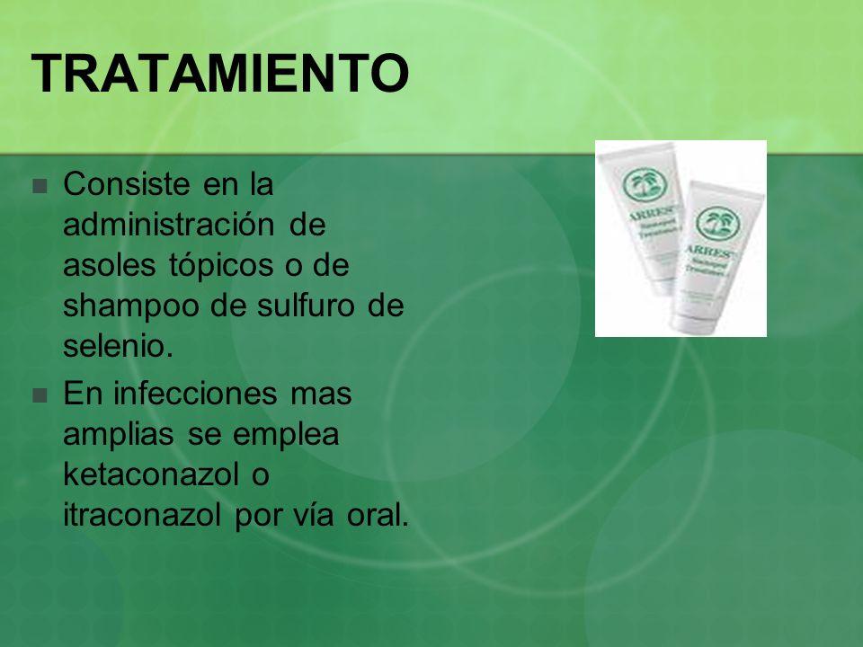 TRATAMIENTO Consiste en la administración de asoles tópicos o de shampoo de sulfuro de selenio. En infecciones mas amplias se emplea ketaconazol o itr
