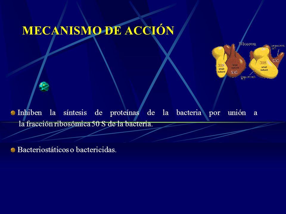 MECANISMO DE ACCIÓN Inhiben la síntesis de proteínas de la bacteria por unión a la fracción ribosómica 50 S de la bacteria. Bacteriostáticos o bacteri