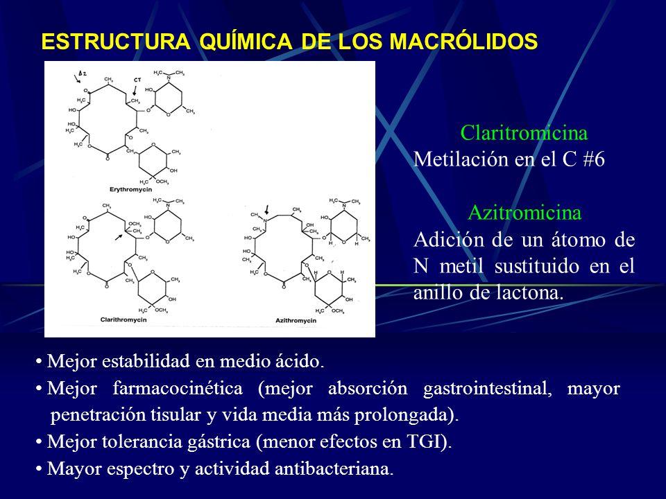 ESTRUCTURA QUÍMICA DE LOS MACRÓLIDOS Mejor estabilidad en medio ácido. Mejor farmacocinética (mejor absorción gastrointestinal, mayor penetración tisu