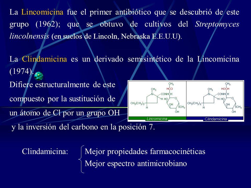La Lincomicina fue el primer antibiótico que se descubrió de este grupo (1962); que se obtuvo de cultivos del Streptomyces lincolnensis (en suelos de