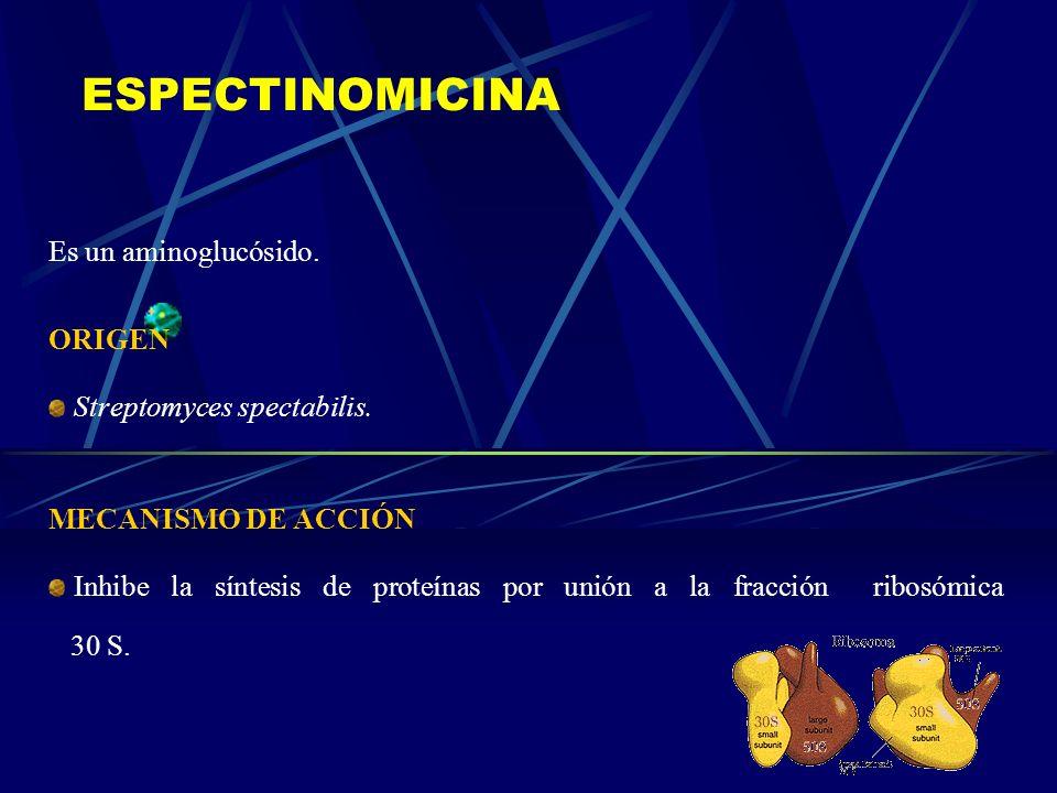 ESPECTINOMICINA Es un aminoglucósido. ORIGEN Streptomyces spectabilis. MECANISMO DE ACCIÓN Inhibe la síntesis de proteínas por unión a la fracción rib