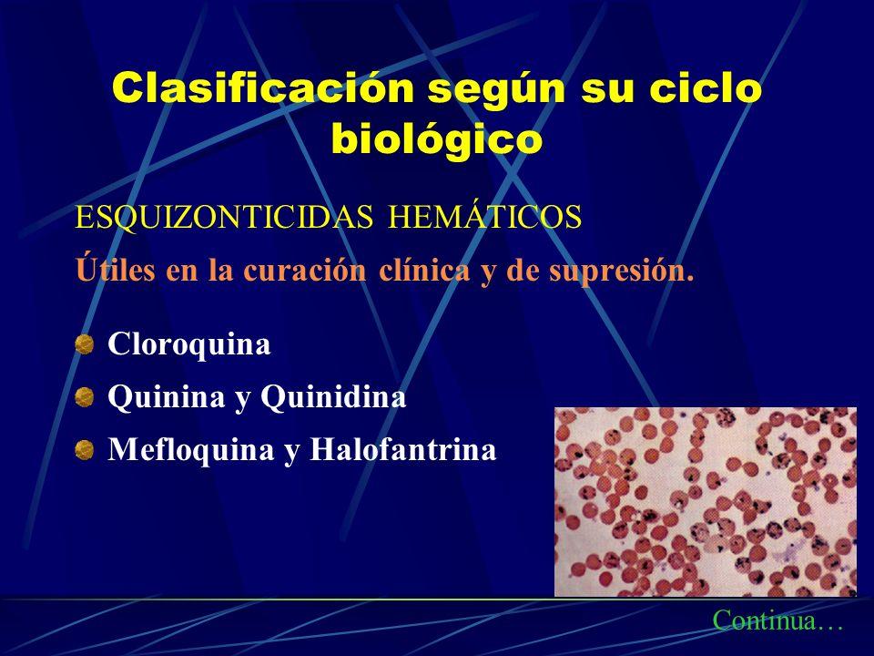 Clasificación según su ciclo biológico ESQUIZONTICIDAS HEMÁTICOS Útiles en la curación clínica y de supresión. Cloroquina Quinina y Quinidina Mefloqui