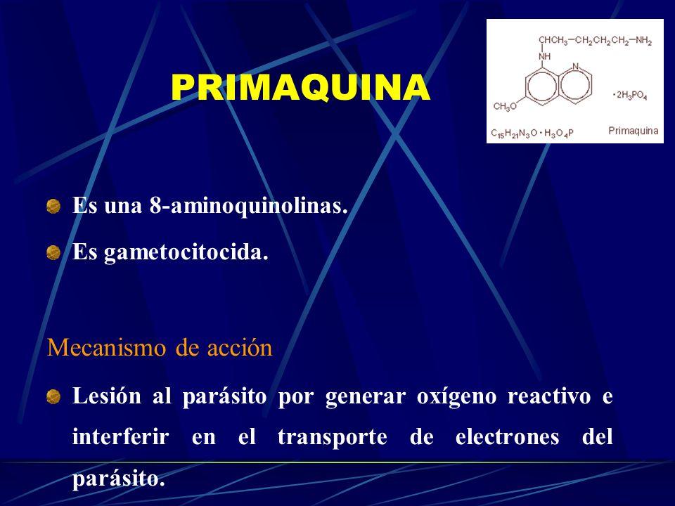PRIMAQUINA Es una 8-aminoquinolinas. Es gametocitocida. Mecanismo de acción Lesión al parásito por generar oxígeno reactivo e interferir en el transpo