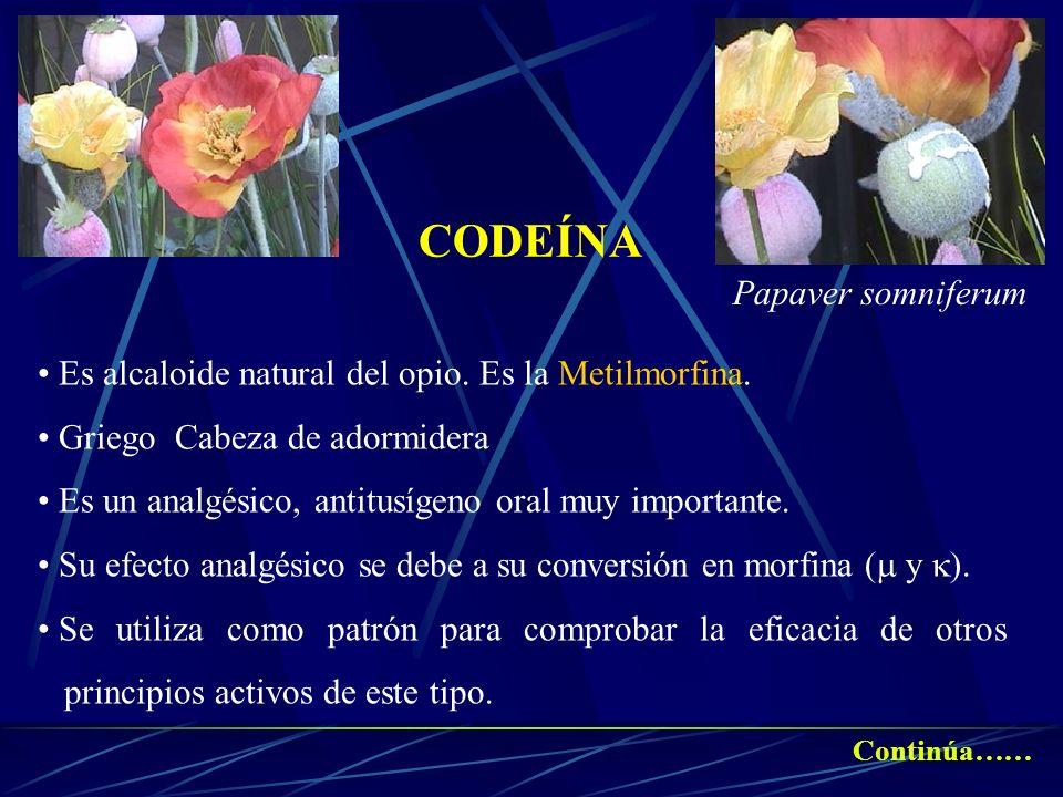 CODEÍNA Es alcaloide natural del opio. Es la Metilmorfina. Griego Cabeza de adormidera Es un analgésico, antitusígeno oral muy importante. Su efecto a