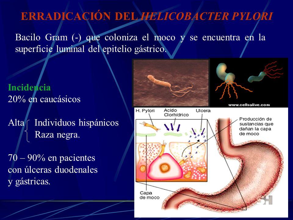 ERRADICACIÓN DEL HELICOBACTER PYLORI Bacilo Gram (-) que coloniza el moco y se encuentra en la superficie luminal del epitelio gástrico. Incidencia 20