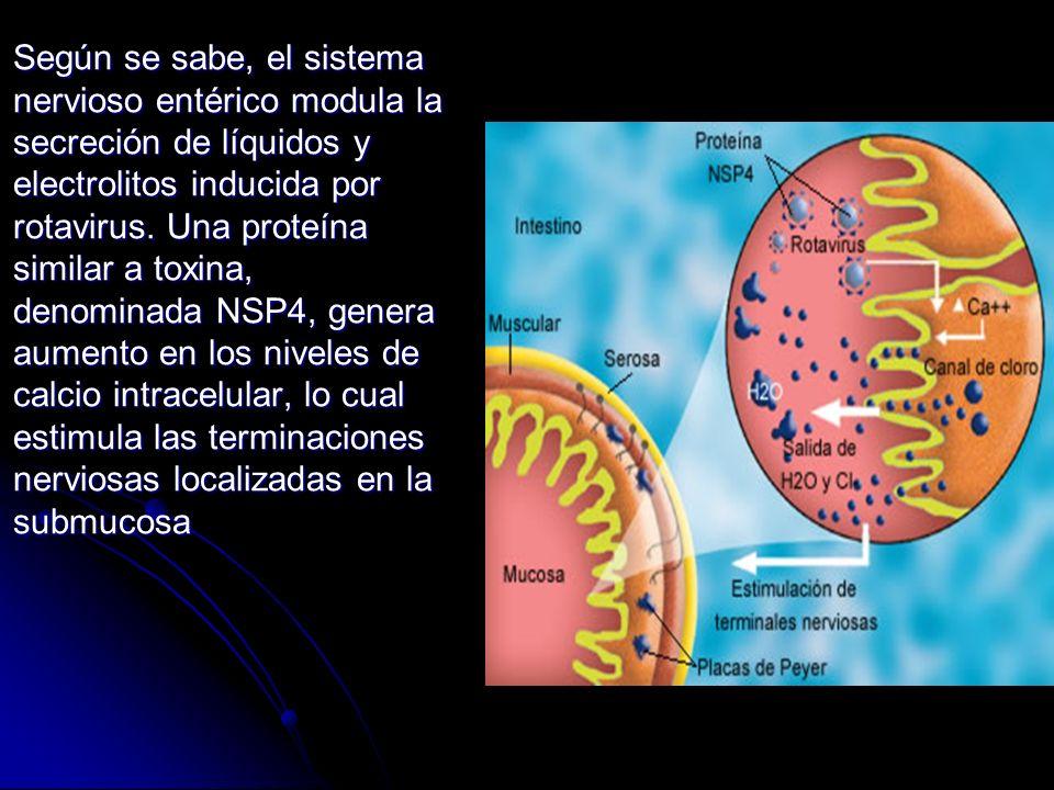 Según se sabe, el sistema nervioso entérico modula la secreción de líquidos y electrolitos inducida por rotavirus. Una proteína similar a toxina, deno