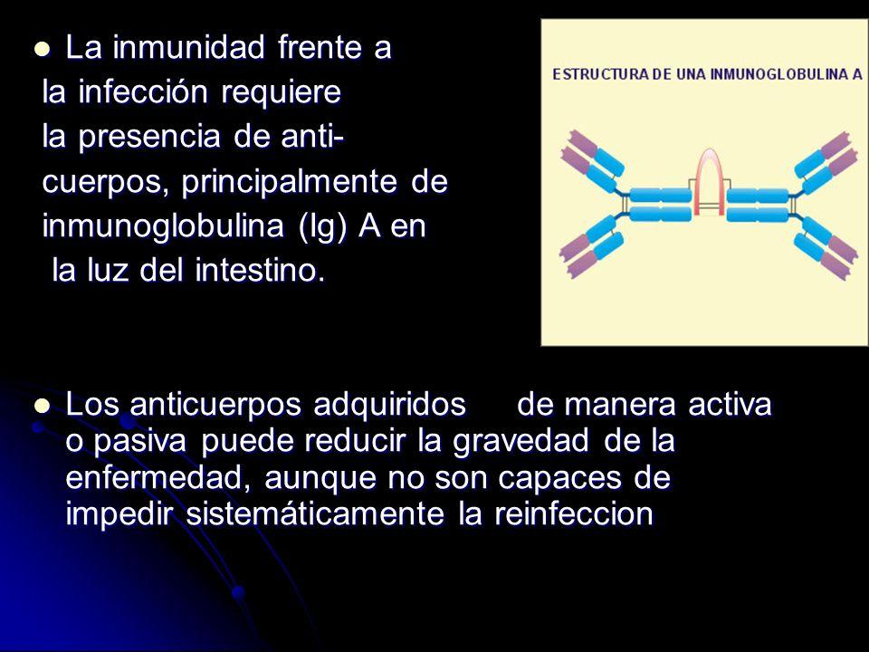 La inmunidad frente a La inmunidad frente a la infección requiere la infección requiere la presencia de anti- la presencia de anti- cuerpos, principal
