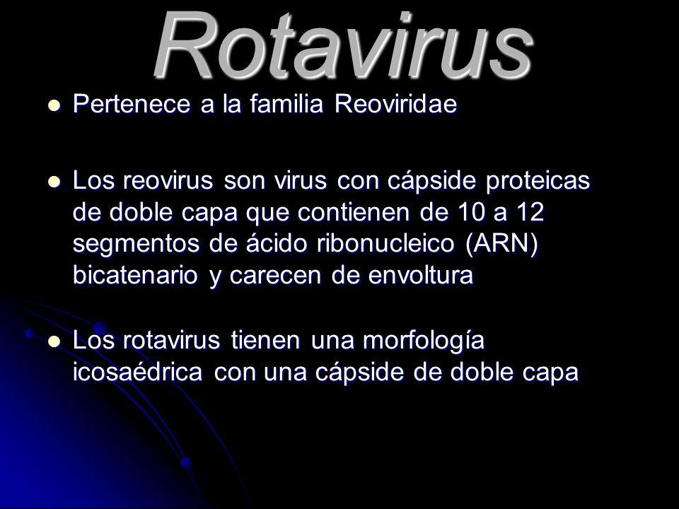 Rotavirus Pertenece a la familia Reoviridae Pertenece a la familia Reoviridae Los reovirus son virus con cápside proteicas de doble capa que contienen