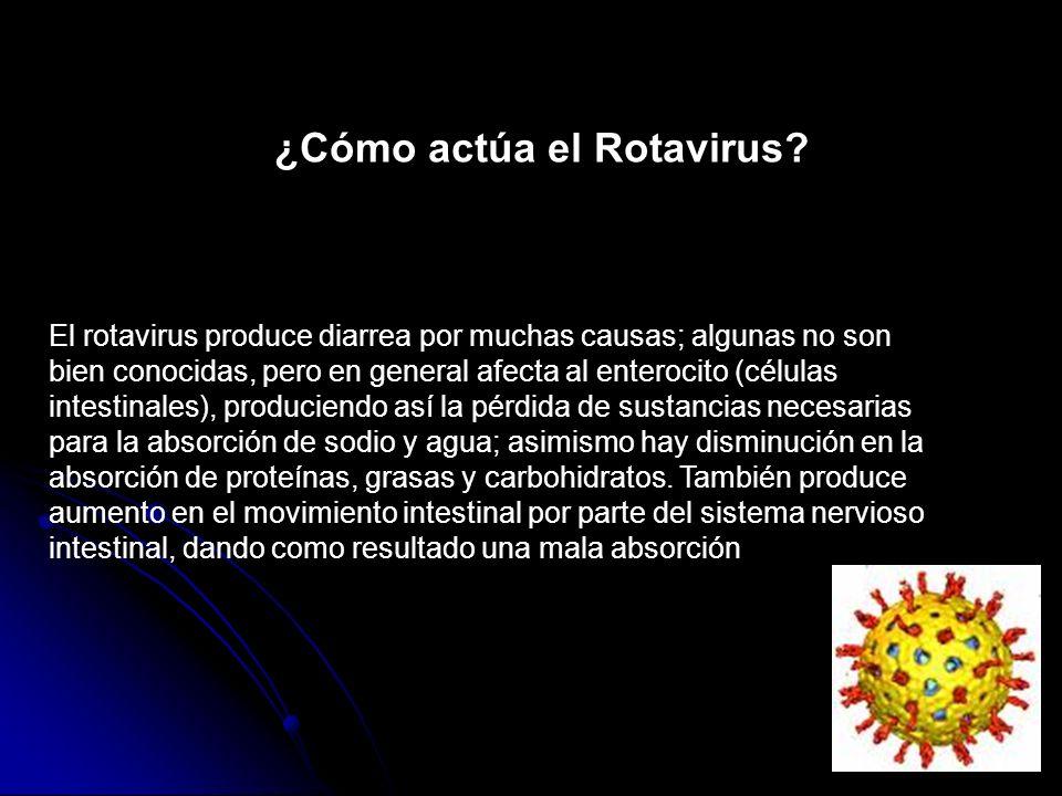 El rotavirus produce diarrea por muchas causas; algunas no son bien conocidas, pero en general afecta al enterocito (células intestinales), produciend