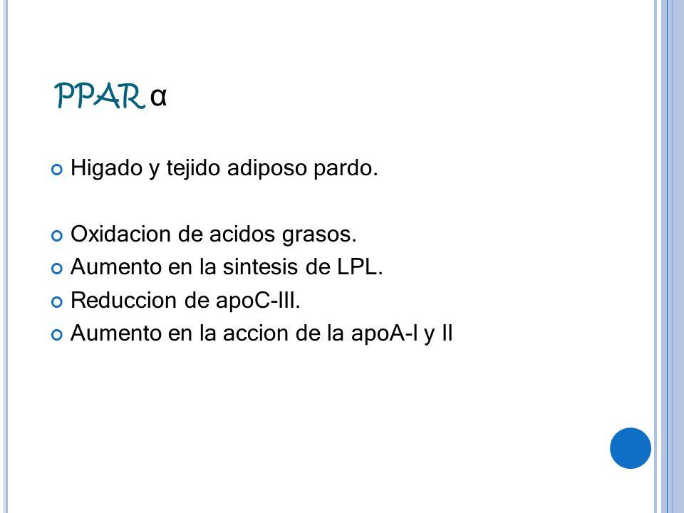 PPAR α Higado y tejido adiposo pardo. Oxidacion de acidos grasos. Aumento en la sintesis de LPL. Reduccion de apoC-III. Aumento en la accion de la apo