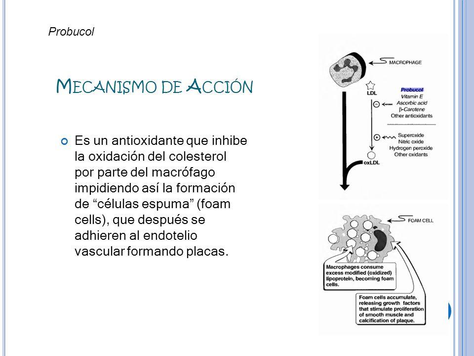 M ECANISMO DE A CCIÓN Es un antioxidante que inhibe la oxidación del colesterol por parte del macrófago impidiendo así la formación de células espuma