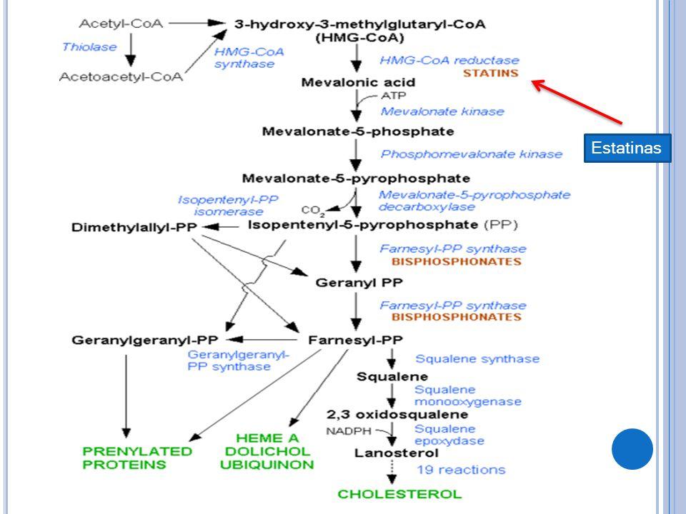 M ECANISMOS DE ACCIÓN Principal efecto: Disminuir las concentraciones de LDL a través de una molécula parecida al ácido mevalónico que inhibe de manera competitiva la reductasa de HMG-CoA, al disminuir la conversión de HMG-CoA en mevalonato, las estatinas inhiben un paso temprano que limita el ritmo de biosíntesis de colesterol.