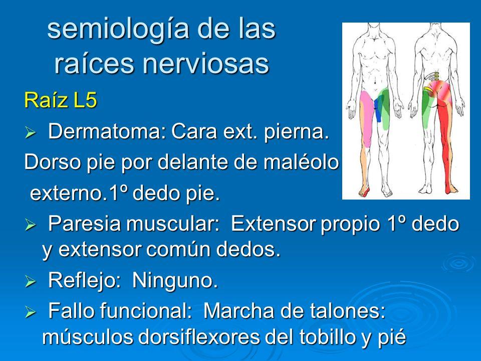 semiología de las raíces nerviosas Raíz L5 Dermatoma: Cara ext. pierna. Dermatoma: Cara ext. pierna. Dorso pie por delante de maléolo externo.1º dedo