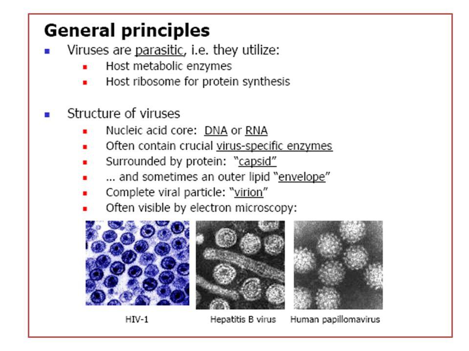 Células NK – Activación NK por IFN- e IFN- (citólisis) – Reconocimiento de células infectadas (MHC-I)