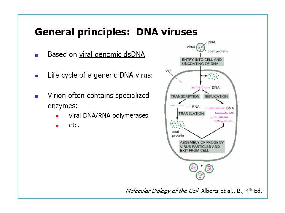 PropertyIFN-αIFN-βIFN-γ Previous designationsLeukocyte IFNFibroblast IFNImmune IFN Type I Type II Genes>2011 Molecular mass (Da)* Major subtypes16,000-23,00023,00020,000-25,000 Cloned 19,000 16,000 GlycosylationNo Yes pH 2 stabilityStable Labile InductionViruses Immune activation Principal sourceEpithelium, leukocytesFibroblastLymphocyte Introns in geneNo Yes Homology with human IFN-α100%30%-50%<10% Propiedades de los interferones humanos *Molecular mass of monomeric form.