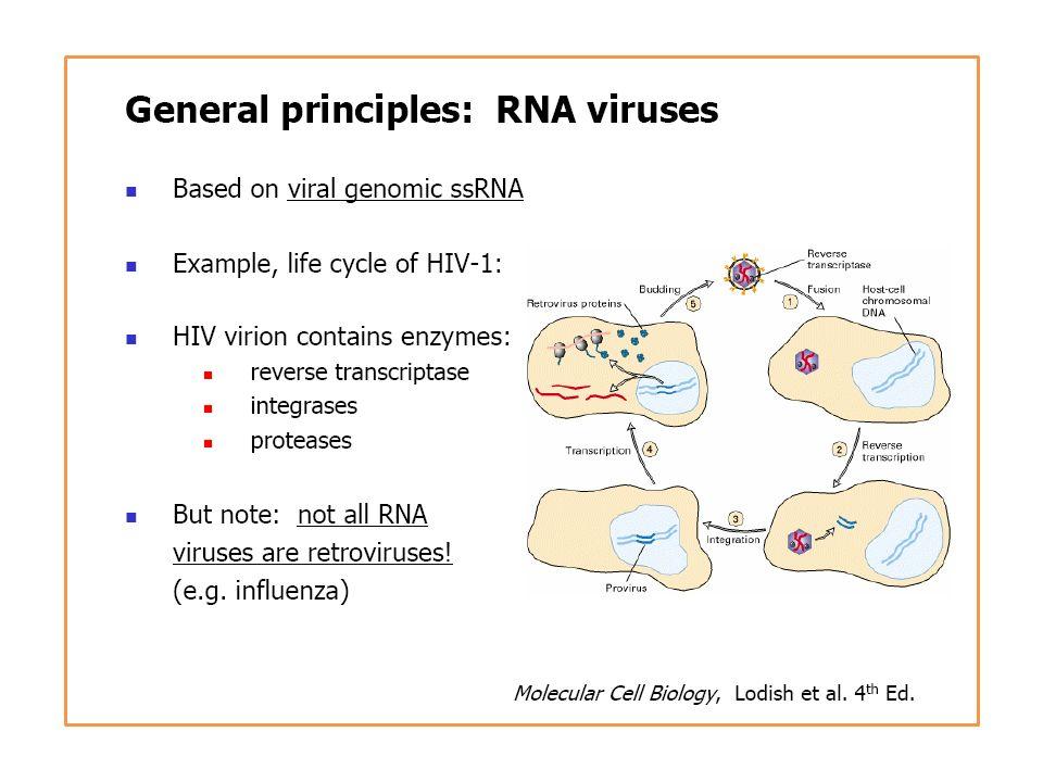 La respuesta adquirida a la infección viral Respuesta humoral – – Anticuerpos neutralizantes IgA secretoria IgG – Ac que inducen activación de complemento y opsonización de partículas virales Respuesta celular – Linfocitos CD8 – CD8 – Th1 CD4