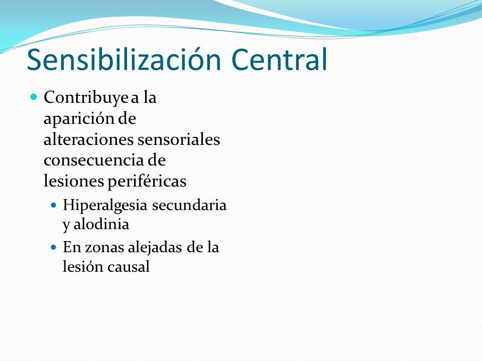 Sensibilización Central Contribuye a la aparición de alteraciones sensoriales consecuencia de lesiones periféricas Hiperalgesia secundaria y alodinia