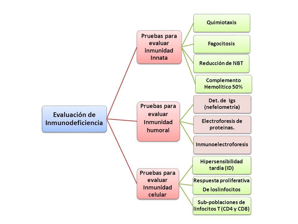 Evaluación de Inmunodeficiencia Pruebas para evaluar inmunidad Innata QuimiotaxisFagocitosisReducción de NBT Complemento Hemolitico 50% Pruebas para e