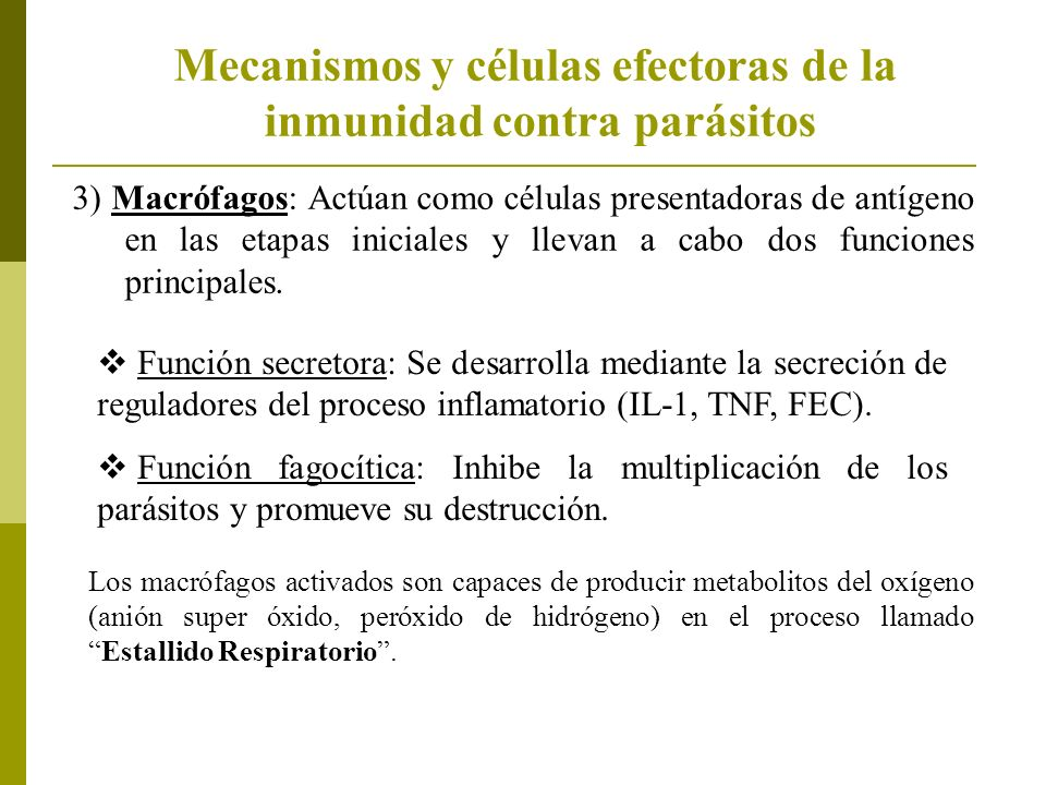 3) Macrófagos: Actúan como células presentadoras de antígeno en las etapas iniciales y llevan a cabo dos funciones principales. Función secretora: Se