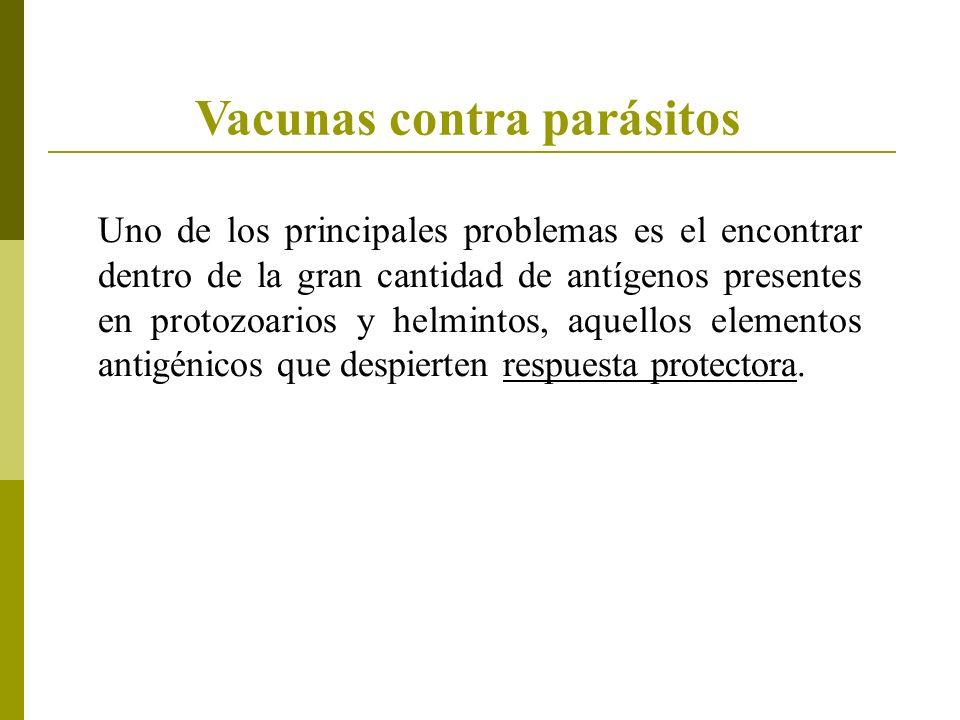 Vacunas contra parásitos Uno de los principales problemas es el encontrar dentro de la gran cantidad de antígenos presentes en protozoarios y helminto