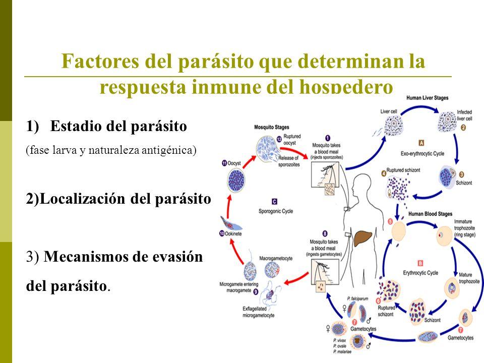 Factores del parásito que determinan la respuesta inmune del hospedero 1)Estadio del parásito (fase larva y naturaleza antigénica) 2)Localización del parásito 3) Mecanismos de evasión del parásito.