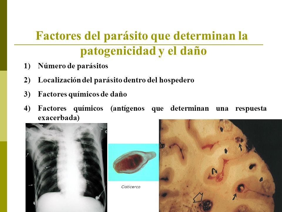 Factores del parásito que determinan la patogenicidad y el daño 1)Número de parásitos 2)Localización del parásito dentro del hospedero 3)Factores químicos de daño 4)Factores químicos (antígenos que determinan una respuesta exacerbada) Cisticerco