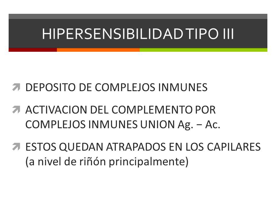 HIPERSENSIBILIDAD TIPO III DEPOSITO DE COMPLEJOS INMUNES ACTIVACION DEL COMPLEMENTO POR COMPLEJOS INMUNES UNION Ag. Ac. ESTOS QUEDAN ATRAPADOS EN LOS