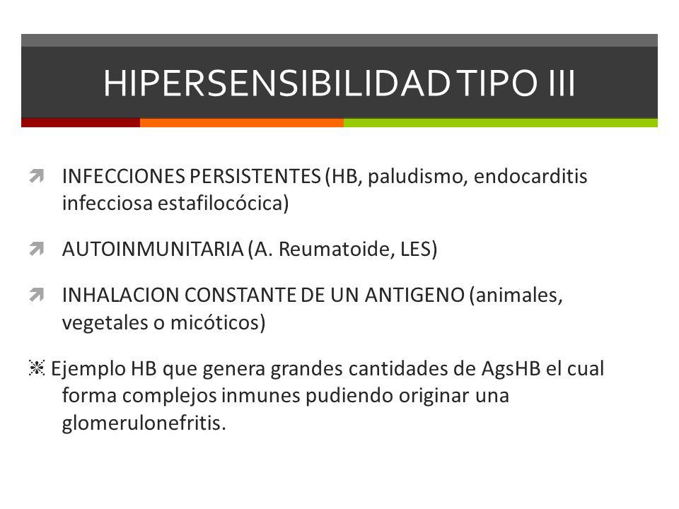HIPERSENSIBILIDAD TIPO III INFECCIONES PERSISTENTES (HB, paludismo, endocarditis infecciosa estafilocócica) AUTOINMUNITARIA (A. Reumatoide, LES) INHAL