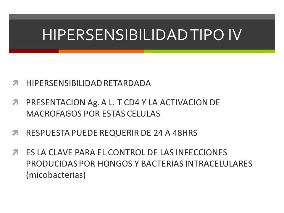 HIPERSENSIBILIDAD TIPO IV HIPERSENSIBILIDAD RETARDADA PRESENTACION Ag. A L. T CD4 Y LA ACTIVACION DE MACROFAGOS POR ESTAS CELULAS RESPUESTA PUEDE REQU