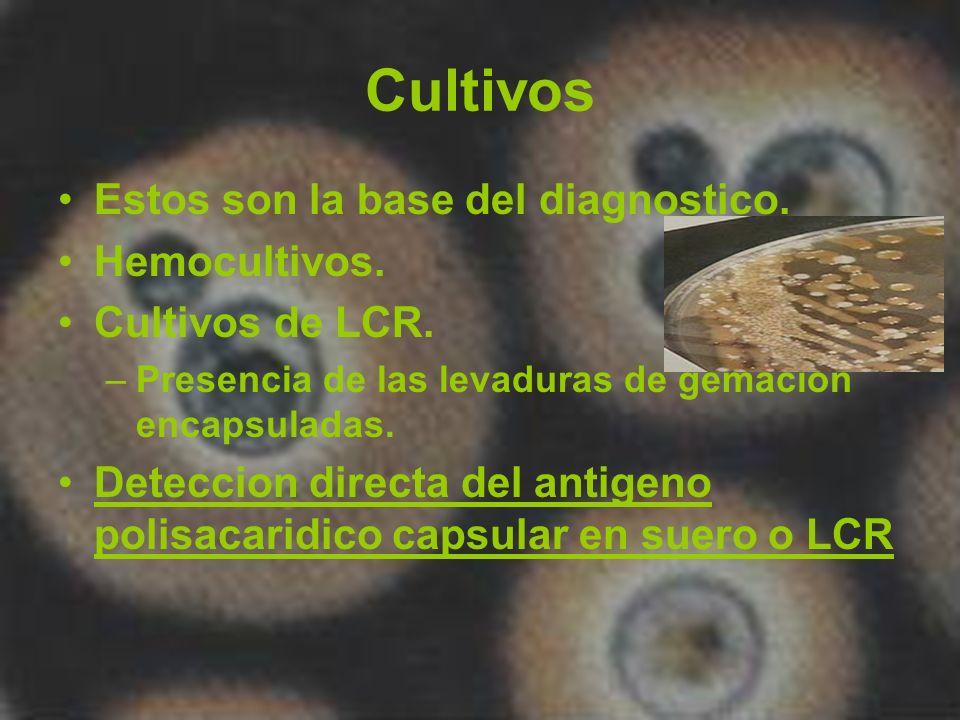 Cultivos Estos son la base del diagnostico. Hemocultivos. Cultivos de LCR. –Presencia de las levaduras de gemacion encapsuladas. Deteccion directa del