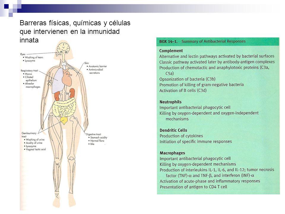 Barreras físicas, químicas y células que intervienen en la inmunidad innata