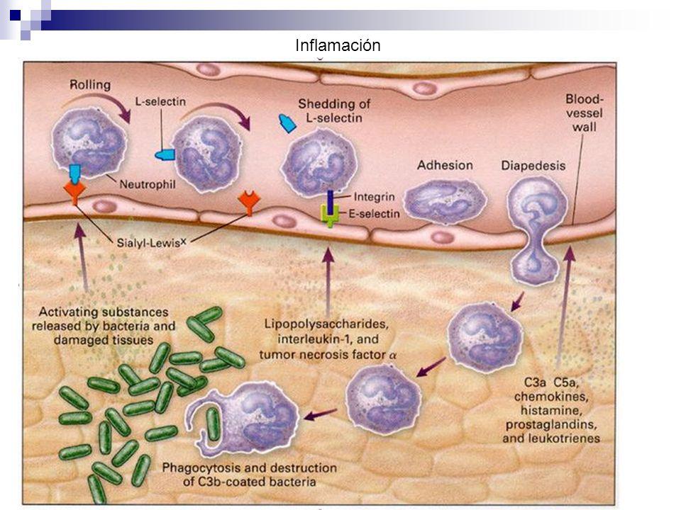 Funciones de células inmunes