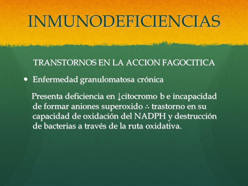 INMUNODEFICIENCIAS TRANSTORNOS EN LA ACCION FAGOCITICA Enfermedad granulomatosa crónica Enfermedad granulomatosa crónica Presenta deficiencia en citoc