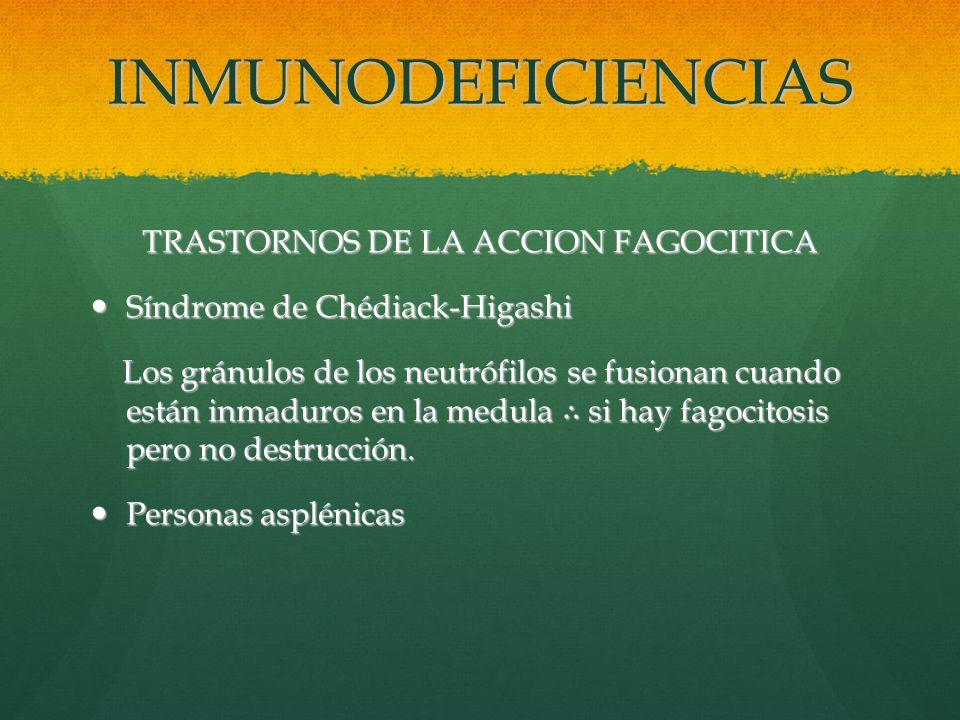 INMUNODEFICIENCIAS TRASTORNOS DE LA ACCION FAGOCITICA Síndrome de Chédiack-Higashi Síndrome de Chédiack-Higashi Los gránulos de los neutrófilos se fus