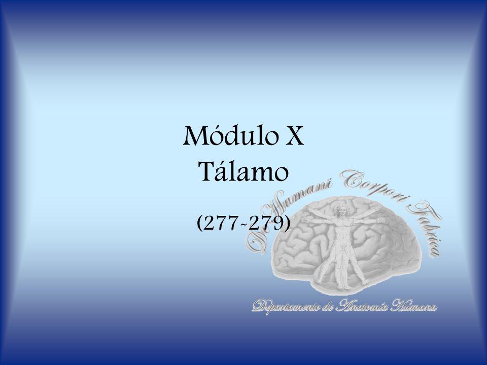 Departamento de Anatomía Humana, U.A. N. L. Tálamo Es la estructura más voluminosa del diencéfalo.