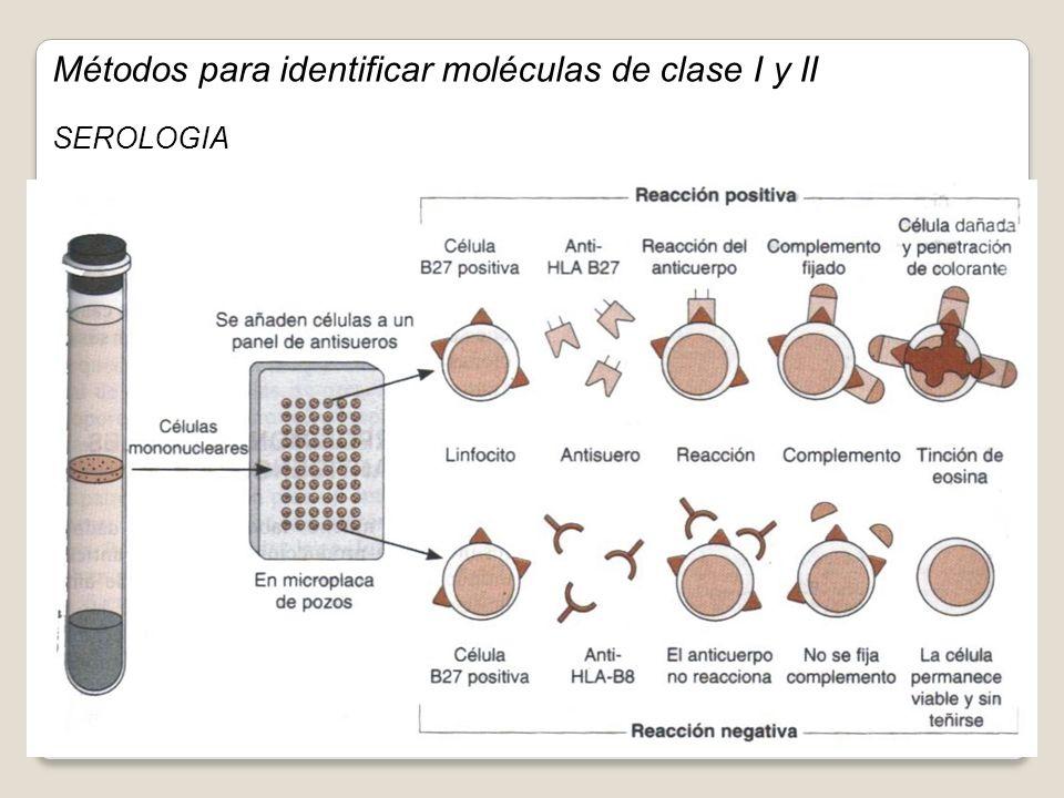 Métodos para identificar moléculas de clase I y II SEROLOGIA